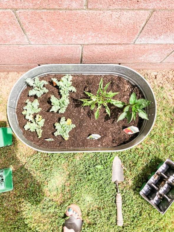 upcylced galvanized tub made into a container garden