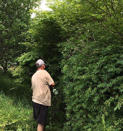 EGO Hedge trimmer overgrown bush profile