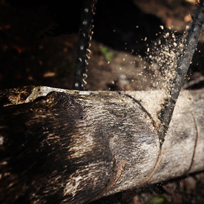 Croc survival chainsaw cut