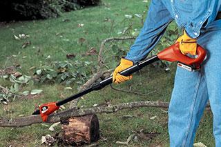 Pole chain saw tree cutting