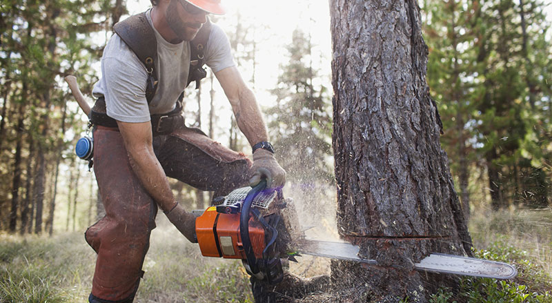 How to Cut Down a Tree Safely Using a Chainsaw