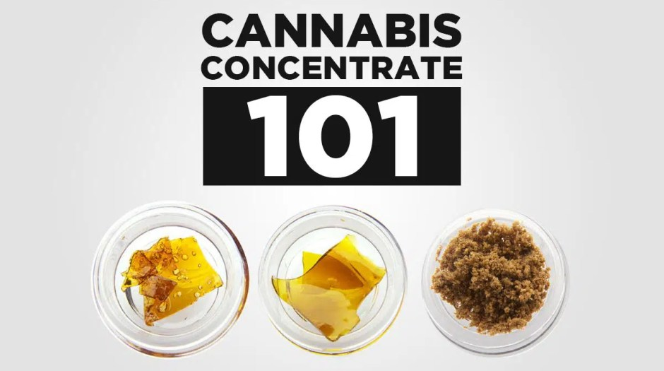 Cannabis Concentrate 101