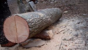 How to Rip A Log with A Chainsaw