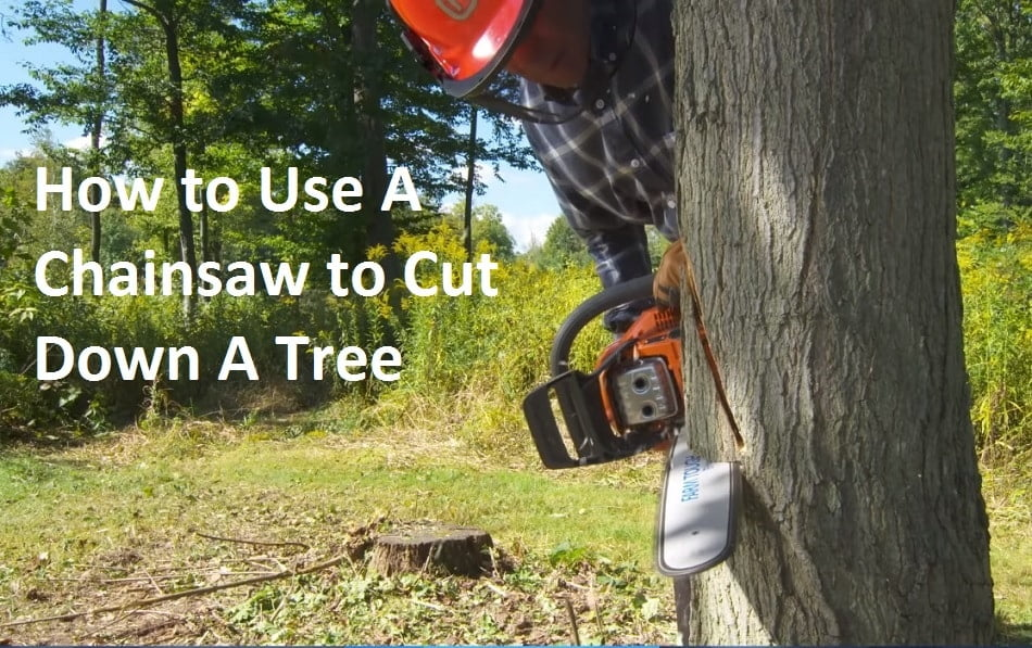 How to Use A Chainsaw to Cut Down A Tree Safely