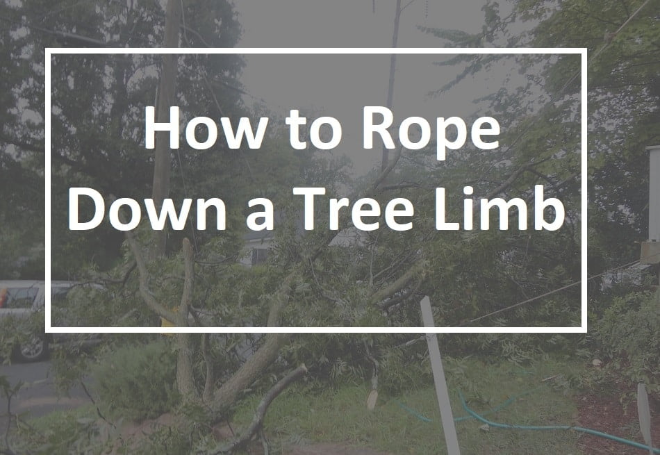 How to Rope Down a Tree Limb