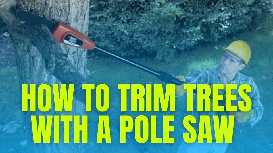 How To Trim Trees With A Pole Saw