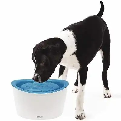 Zeus Fresh & Clear Elevated Dog and Cat Water Dispenser, Large Drinking Water Fountain with Purifying Filter