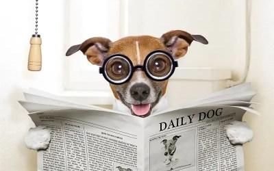 11 Best Indoor Dog Potties – Prevent Accidents Before They Happen