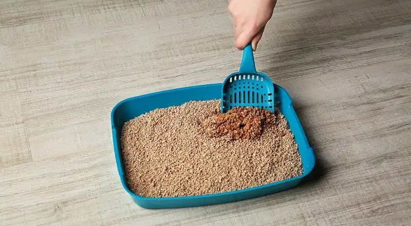 How does a cat litter for multiple cats work