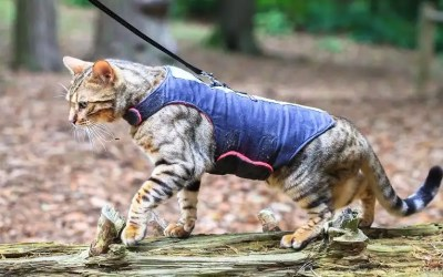 Best Cat Harnesses For Safe & Enjoyable Walk For Your Cat