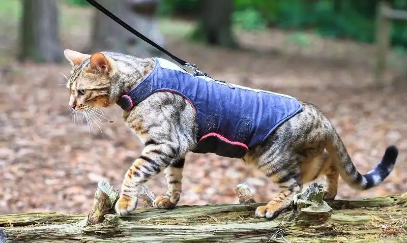 Best cat harness for your cat's safety and comfort