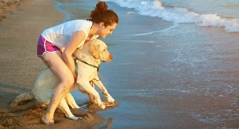 Dogs with a phobia for water