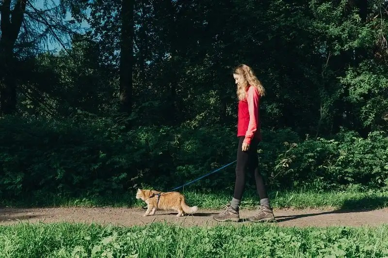 How to train your cat to walk with a harness and leash