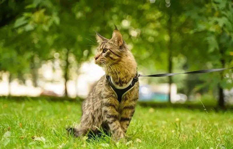 What makes a great cat harness