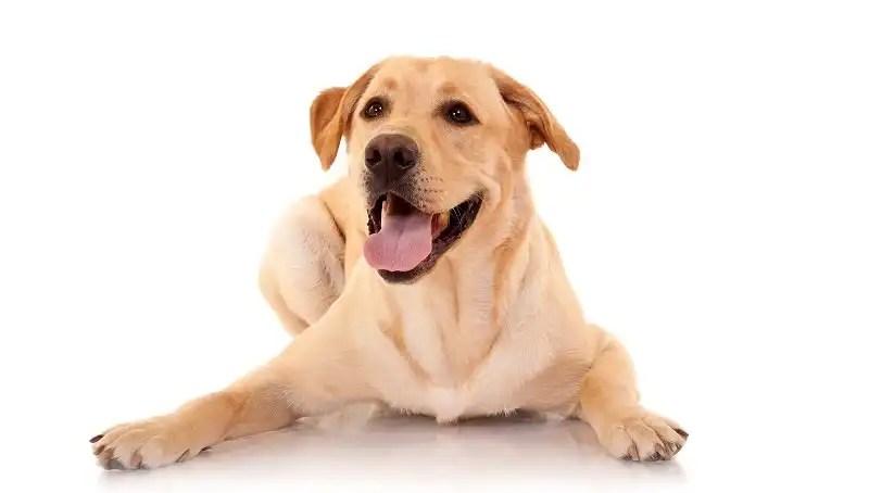 Adult dog - a friend for a lifetime