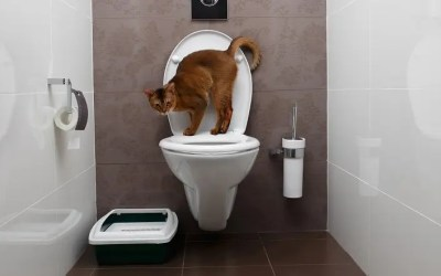 9 Best Flushable Cat Litters – Natural & Septic-Safe