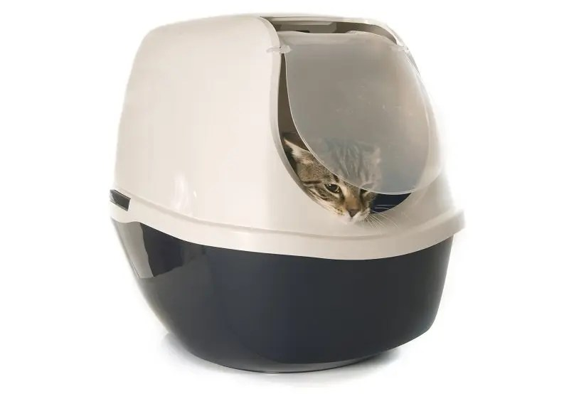 The Right Litter Box