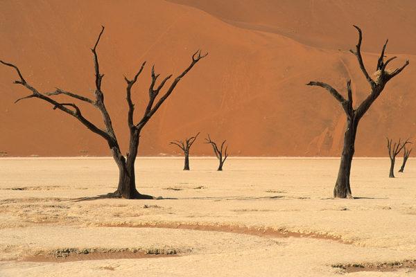 Dead vlei, Sossussvlei dune field, Namib Desert, Namibia