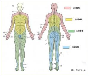下肢の痛み別 ― 腰椎ヘルニア診斷 | 公式ブログ | 通町接骨院 ...