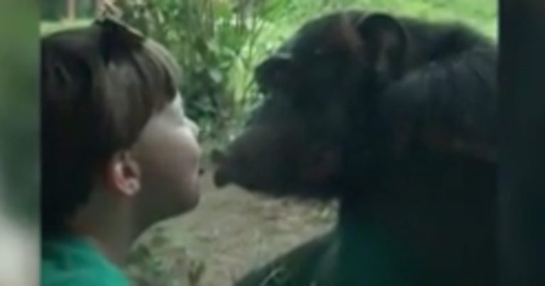 Boy Kiss Ape Through Separate window