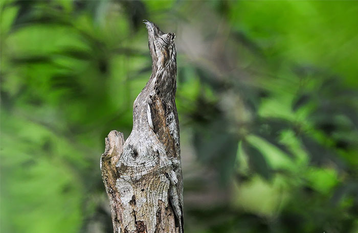 Animals That Use Camouflage To Protect Themselves