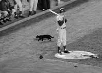Portland Jinx black cat