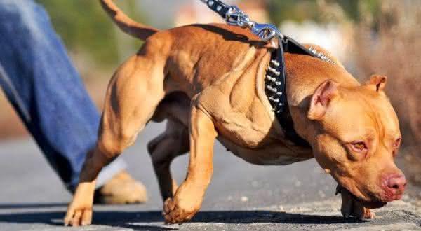 Top 10 Raças De Cães Mais Perigosas Do Mundo Top 10 Mais