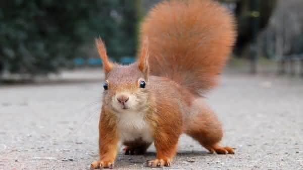 esquilo animais mais espertos