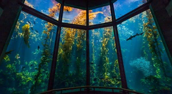 Monterey Bay um dos maiores aquarios do mundo