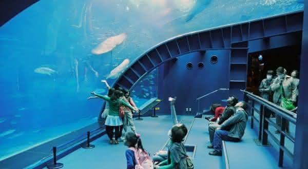 Okinawa Churaumi Aquarium um dos maiores