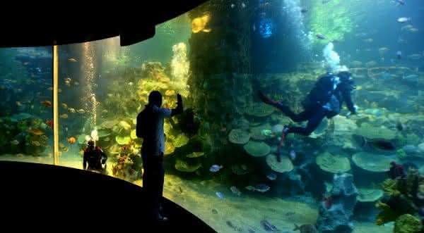aquario Turkuazoo