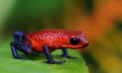 Top 10 animais mais venenosos do mundo