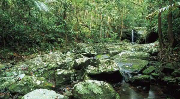 Daintree entre as maiores florestas do mundo