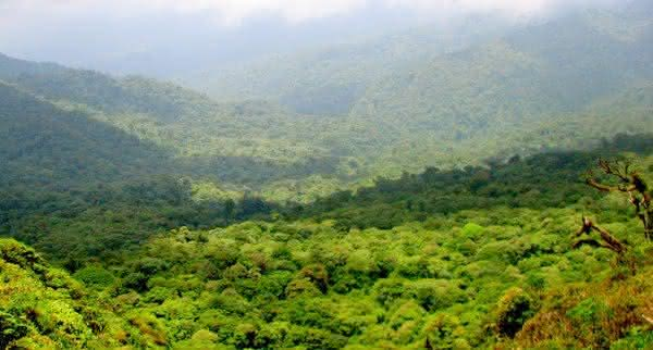 reserva florestal monteverde