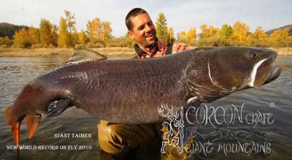 Salmao Siberiano entre os maiores peixes de agua doce do mundo