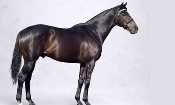 Shareef Dancer entre as racas de cavalos mais caros da historia