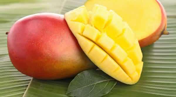 Taiyo-No-Tamago  mangas entre as frutas mais caras do mundo