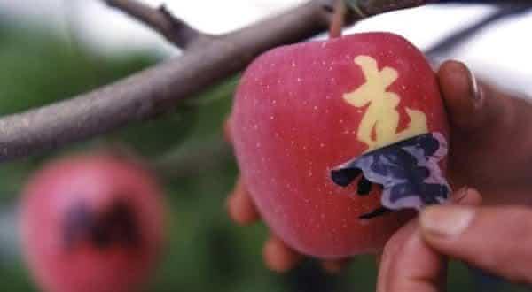 maca Sekai-Ichi entre as frutas mais caras do mundo