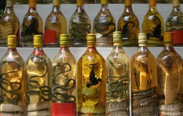 vinho de cobra comidas mais bizarras do mundo