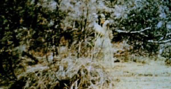 Espirito em Corroboree Rock entre as fotos de fantasma mais famosa