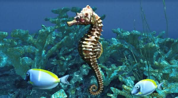 cavalo marinho entre os animais mais lentos do mundo