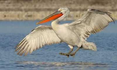 Top 10 maiores aves do mundo