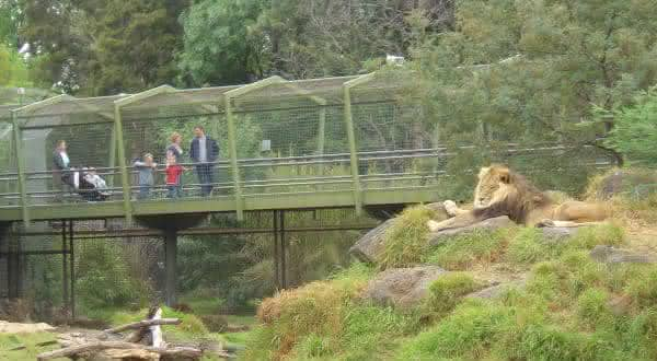Melbourne Zoo entre os melhores zoologicos do mundo