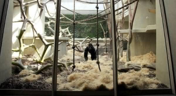 Zoo Basel entre os melhores zoologicos do mundo
