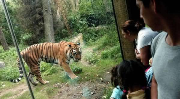 bronx zoo entre os melhores zoologicos do mundo