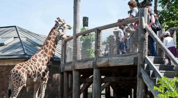 london zoo entre os melhores zoologicos do mundo