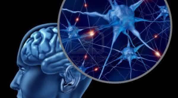 celulas do cerebro nao regeneram entre os mitos derrubados pela ciencia