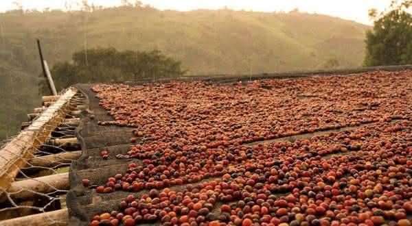 etiopia entre os maiores produtores de cafes do mundo