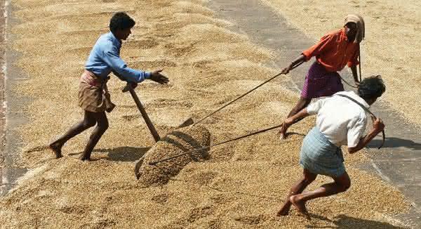 india entre os maiores produtores de cafes do mundo