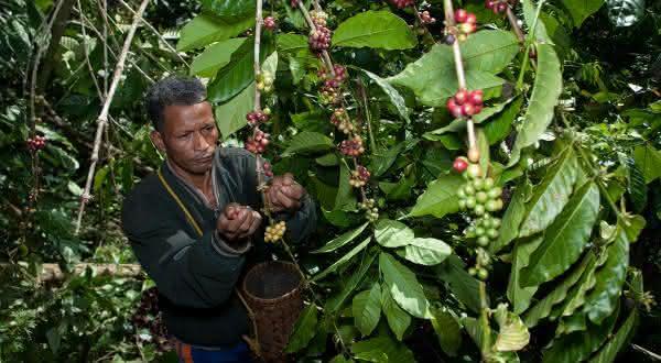 mexico entre os maiores produtores de cafes do mundo